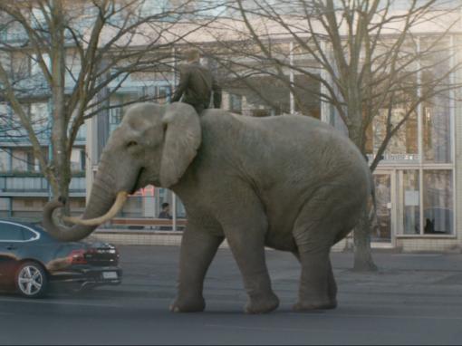 XTip >Elefant<